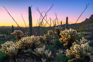 Arizona, Saguaro National Park, Tucson, Sonoran, Desert, Sunset, cholla, saguaro, ocotillo, hiking