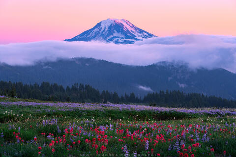 Washington, Goat Rocks Wilderness, Mount Adams, summer, sunset, wildflowers, lupine, paintbrush, alpenglow, wilderness, clouds