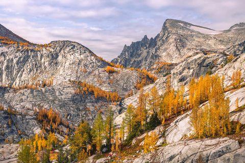 Enchantments, Washington, Cascades, Western Larch, trees, Larix occidentalis, Alpine, Lakes, Wilderness, Area, fall, color