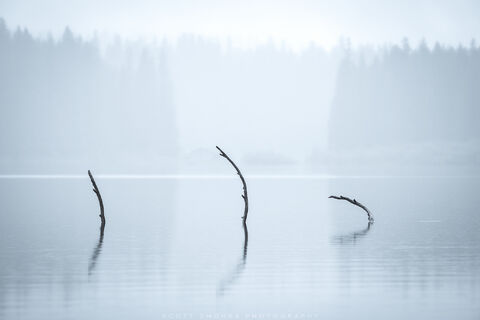 Clear, Lake, Oregon, Tree, Branches, Submerged, monochromatic, water, fallen