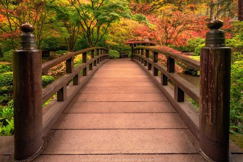 Portland, Japanese, Garden, Fall, Tree, Maple, bridge, autumn