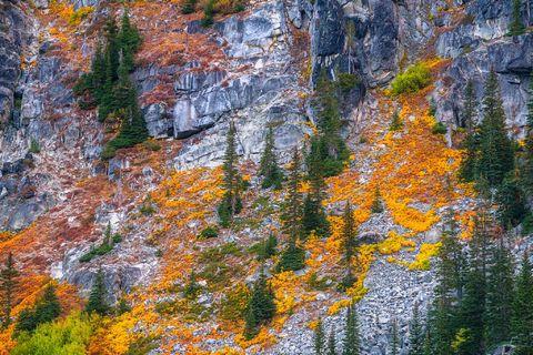 Enchantments, Washington, Cascades, vine, maples, Alpine, Lakes, Wilderness, Area, fall, color,