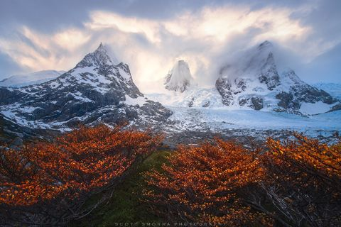 Patagonia, Chile, Fjords, lenga, tree, peaks, glaciated, alpine, glacier,