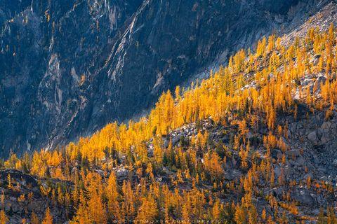 Enchantments, Washington, Cascades, Western Larch, trees, Larix occidentalis, Alpine, Lakes, Wilderness, Area, fall, color,