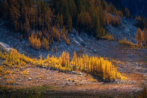 Enchantments, Washington, Cascades, sunrise, Western Larch, trees, Alpine, Lakes, Wilderness, Area, Larix occidentalis, fall, color, clouds, sun