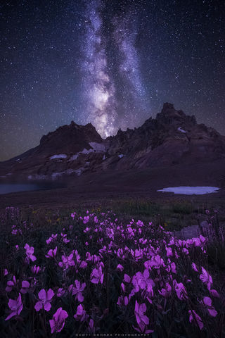 Broken Top, Three Sisters Wilderness, Oregon, Cascades, stars, wildflowers, broad-leaved, willowherb, Milky Way, mountain
