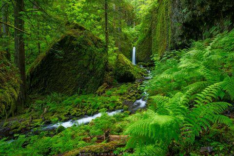 Oregon, Columbia River, Gorge, waterfall, green, spring