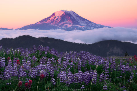 Washington, Goat Rocks Wilderness, Mount Adams, summer, sunrise, wildflowers, lupine, paintbrush, alpenglow, clouds