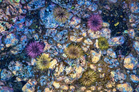 Maui, Hawaii, Sea Urchins, Tide Pool, Low Tide