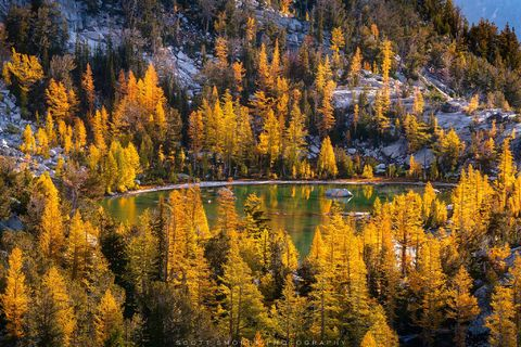 Enchantments, Washington, Cascades, sunrise, Western Larch, trees, Alpine, Lakes, Wilderness, Area, Larix occidentalis, fall, color, tarn, Pacific Northwest
