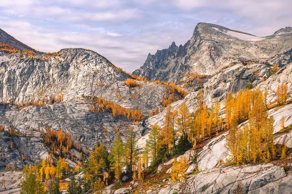 Enchantments, Washington, Cascades, Western Larch, trees, Larix occidentalis, Alpine, Lakes, Wilderness, Area, fall, color