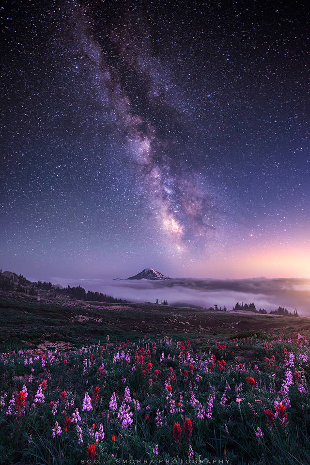 Washington, Cascades, Goat Rocks, Mt Adams, lupine, paintbrush, Milky Way, stars, field, backpacking, night, wildflowers