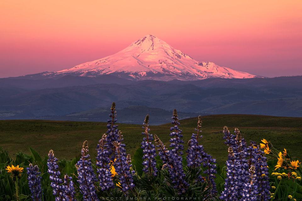 Columbia Hills, Washington, Mt Hood, spring, wildflowers, alpenglow, sunrise, Columbia Gorge,