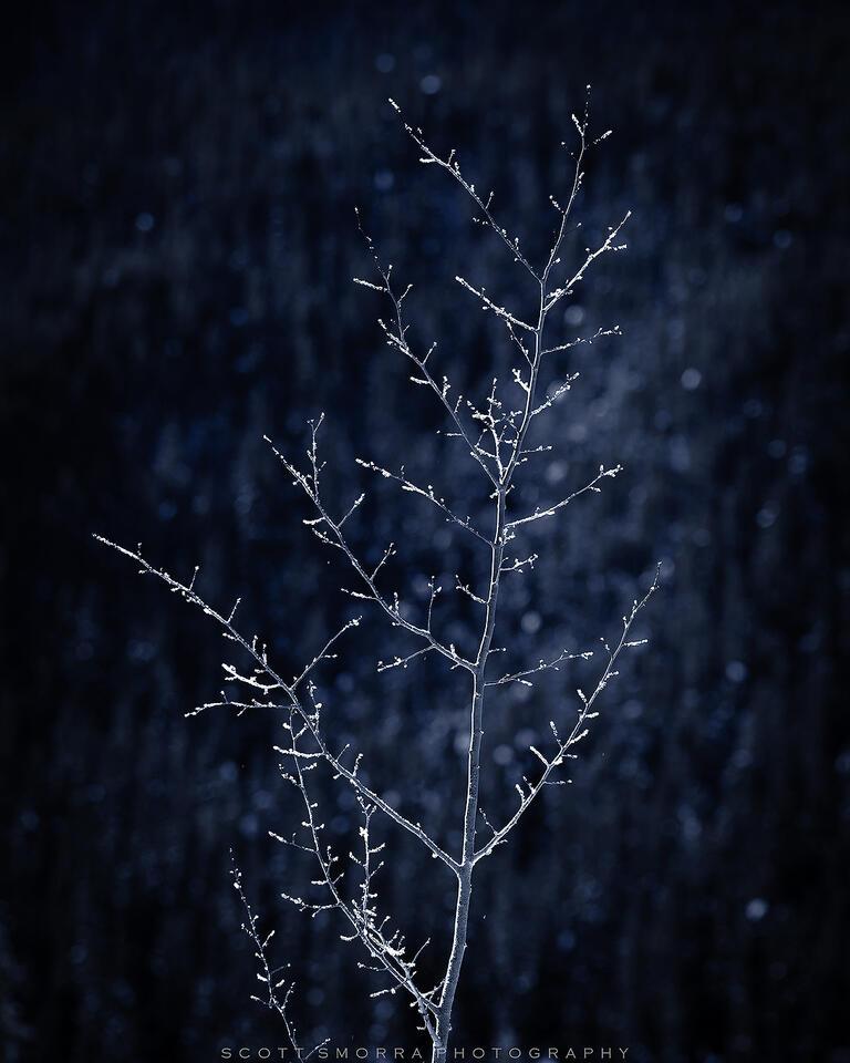 Jasper National Park, Canada, winter, tree, frost, Alberta