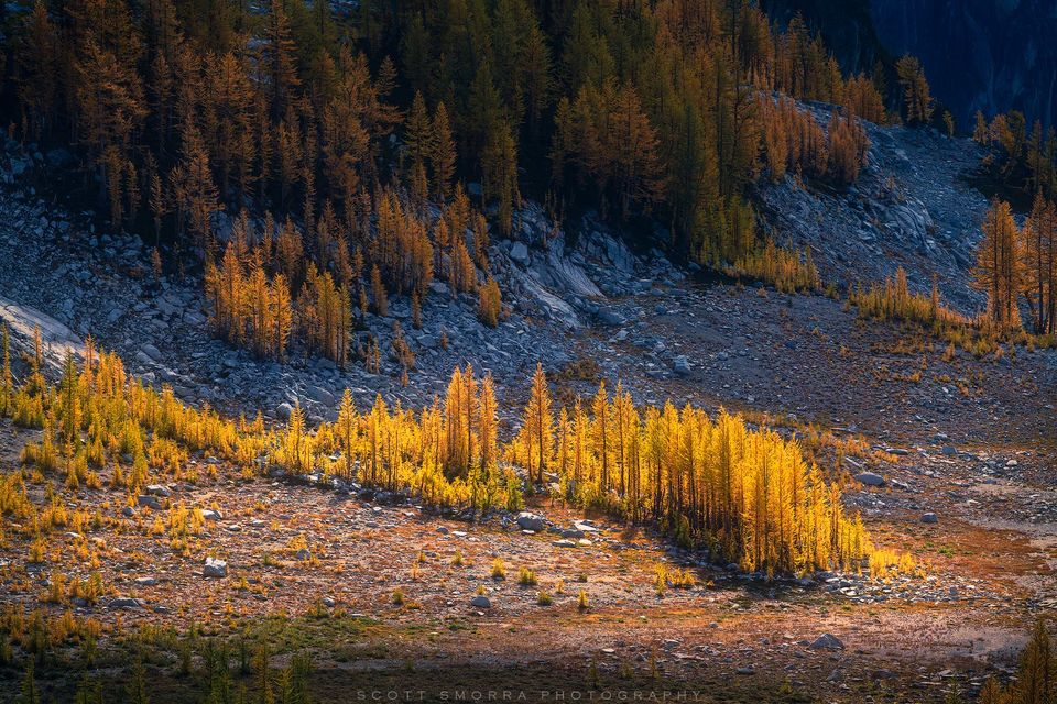 Enchantments, Washington, Cascades, sunrise, Western Larch, trees, Alpine, Lakes, Wilderness, Area, Larix occidentalis, fall, color, clouds, sun