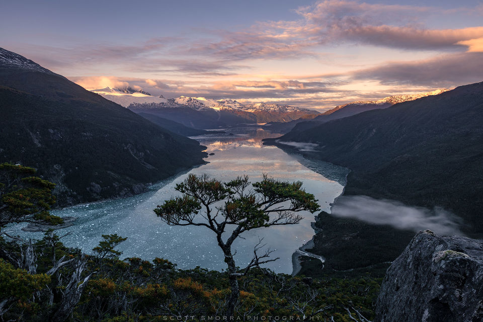 Patagonia, Chile, Fjords, lenga, tree, solitary, view