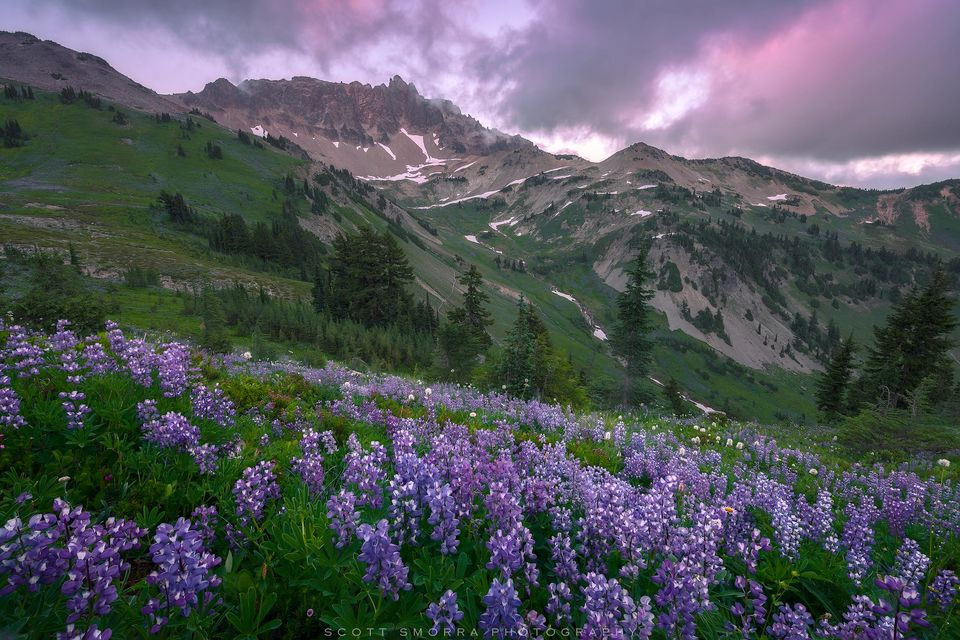 Washington, Goat Rocks Wilderness, summer, sunset, Cispus Basin, wildflowers, lupine