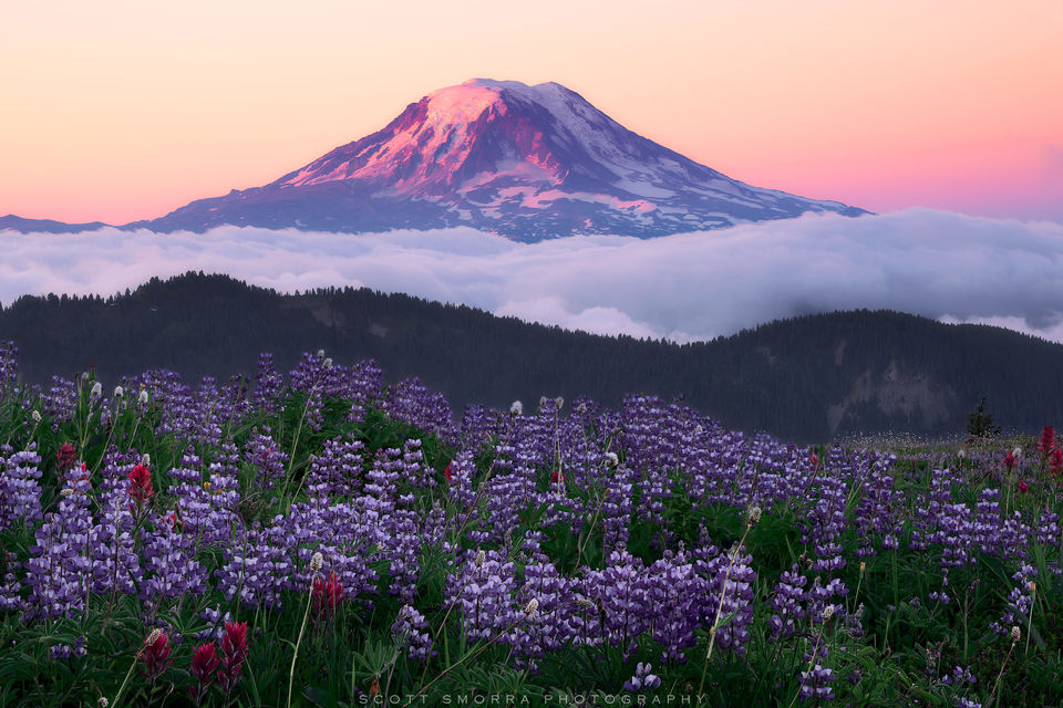 Washington, Goat Rocks Wilderness, Mount Adams, summer, sunrise, wildflowers, lupine, paintbrush, alpenglow, clouds