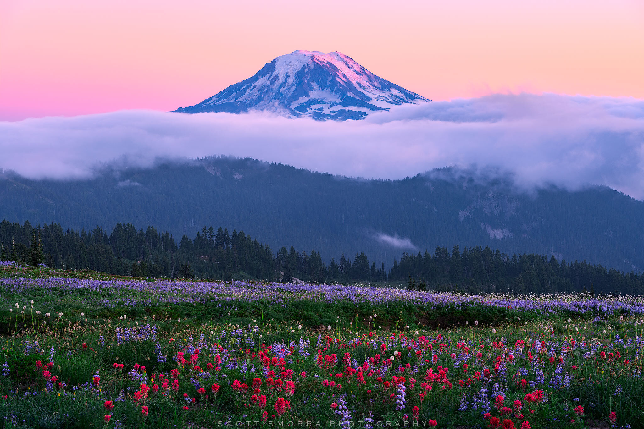 Fine Art Limited Edition of 100 - Summer wildflowers (lupine and paintbrush) and sunset alpenglow on Mount Adams from the Goat...