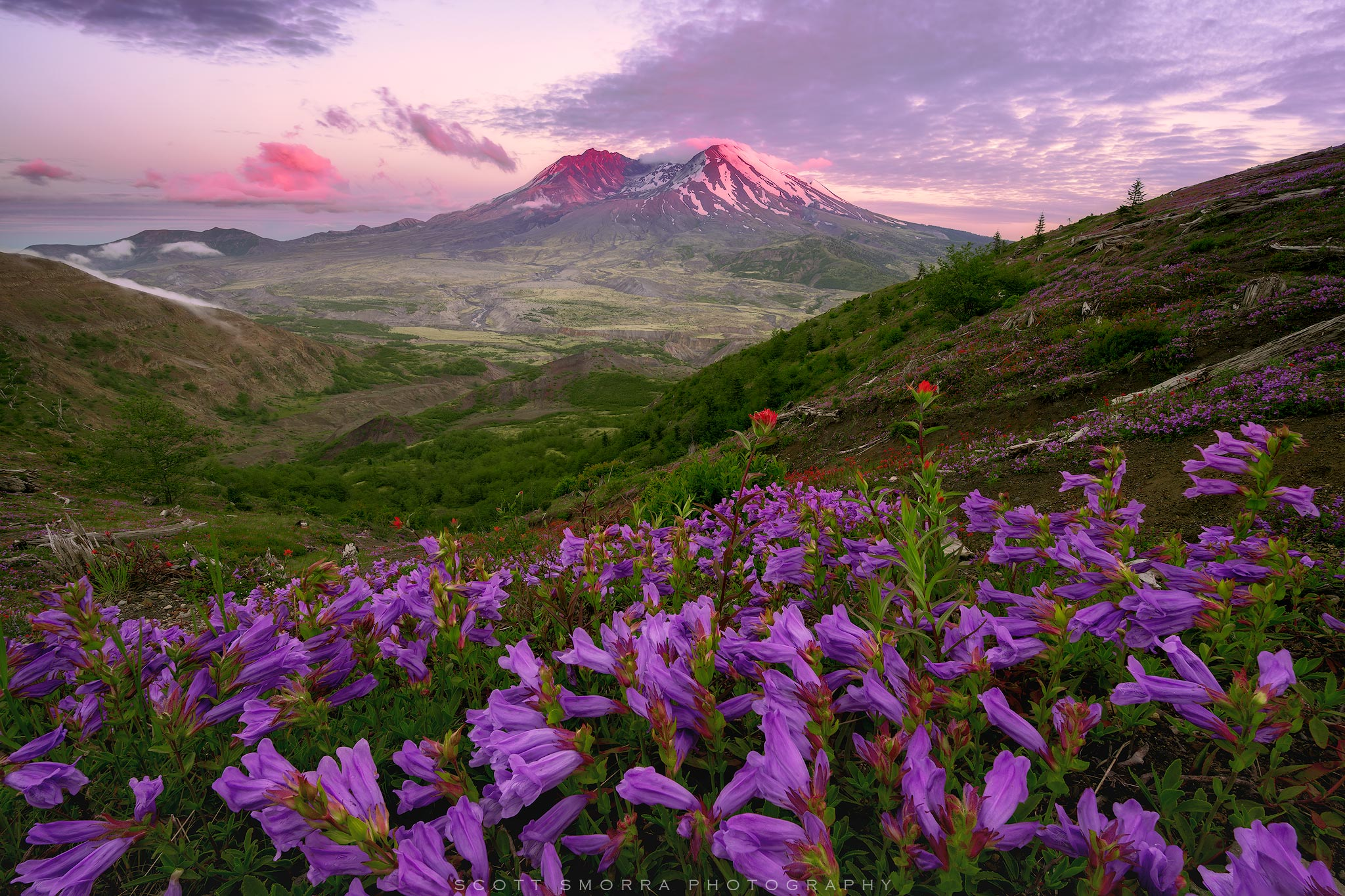 Fine Art Limited Edition of 100 - Summer wildflowers and sunset alpenglow at Mt St Helens National Volcanic Monument. On May...