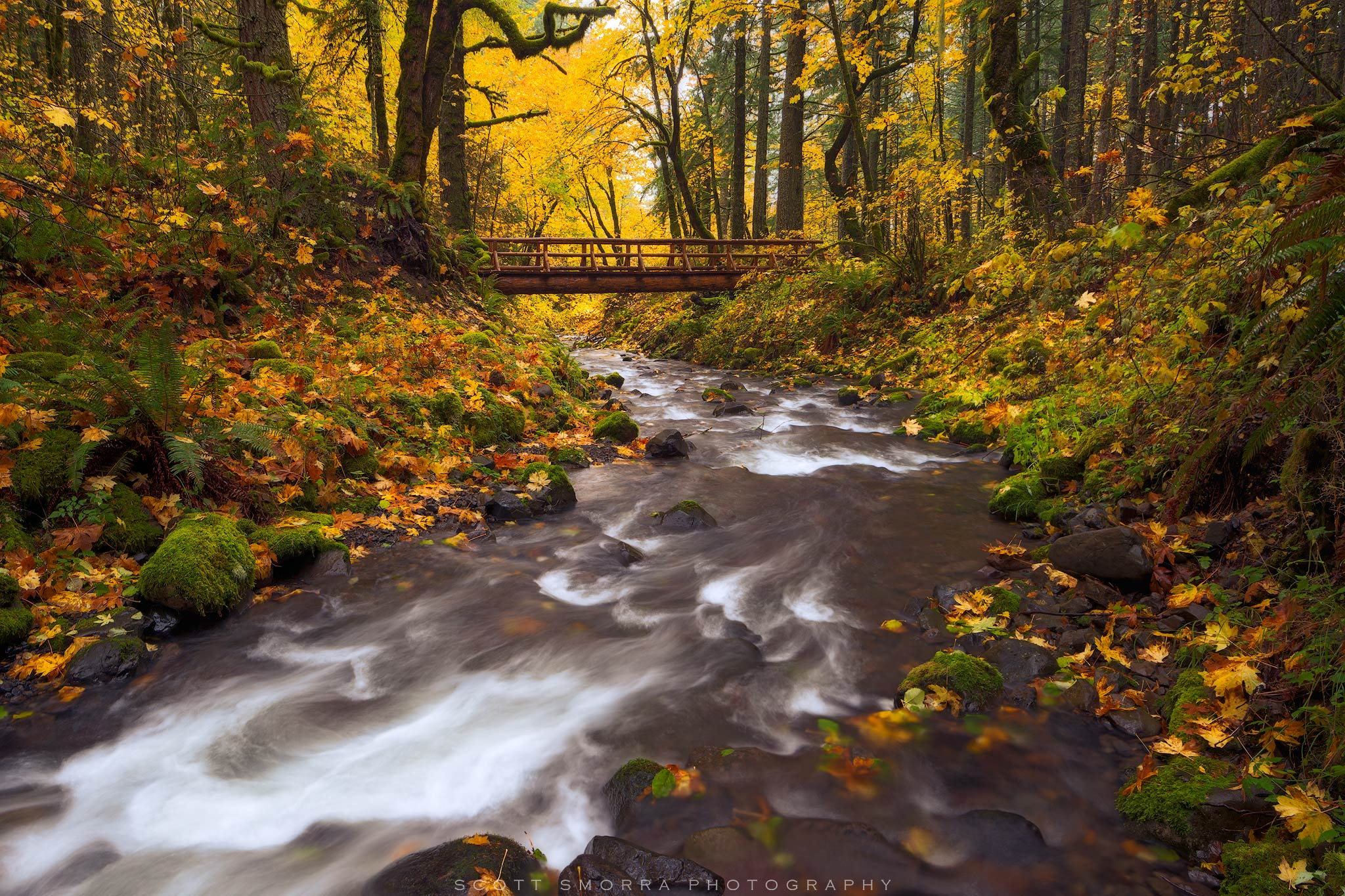 Fine Art Limited Edition of 100 - Peak fall colors and a wooden bridge over a small creek in the Columbia River Gorge of Oregon...