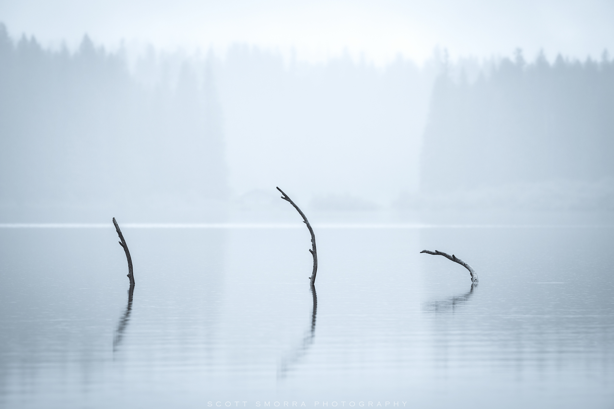 Clear, Lake, Oregon, Tree, Branches, Submerged, monochromatic, water, fallen, photo