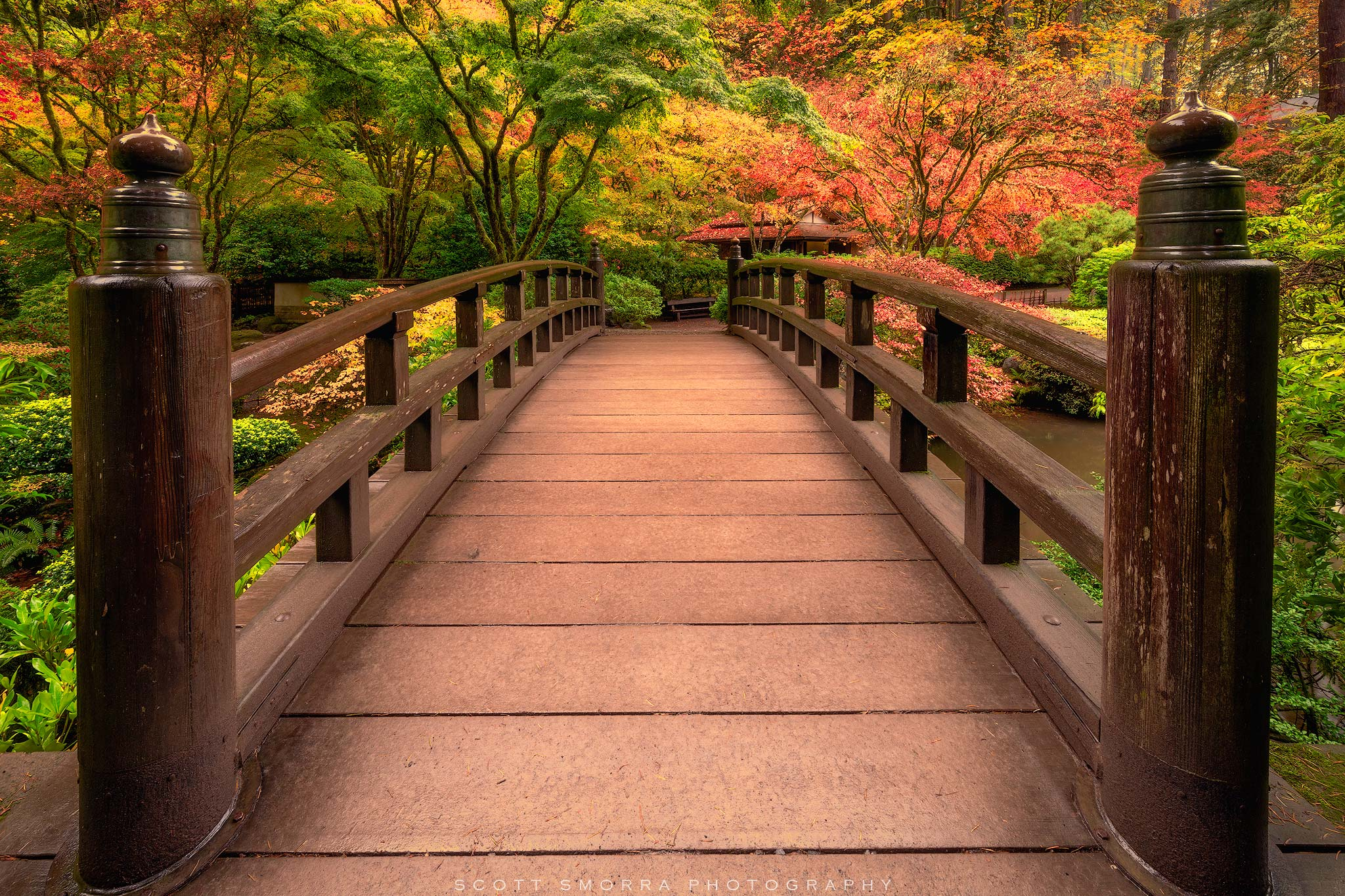 Fine Art Limited Edition of 100. - Stunning fall colors surround the garden bridge at the Portland Japanese Garden, Portland...