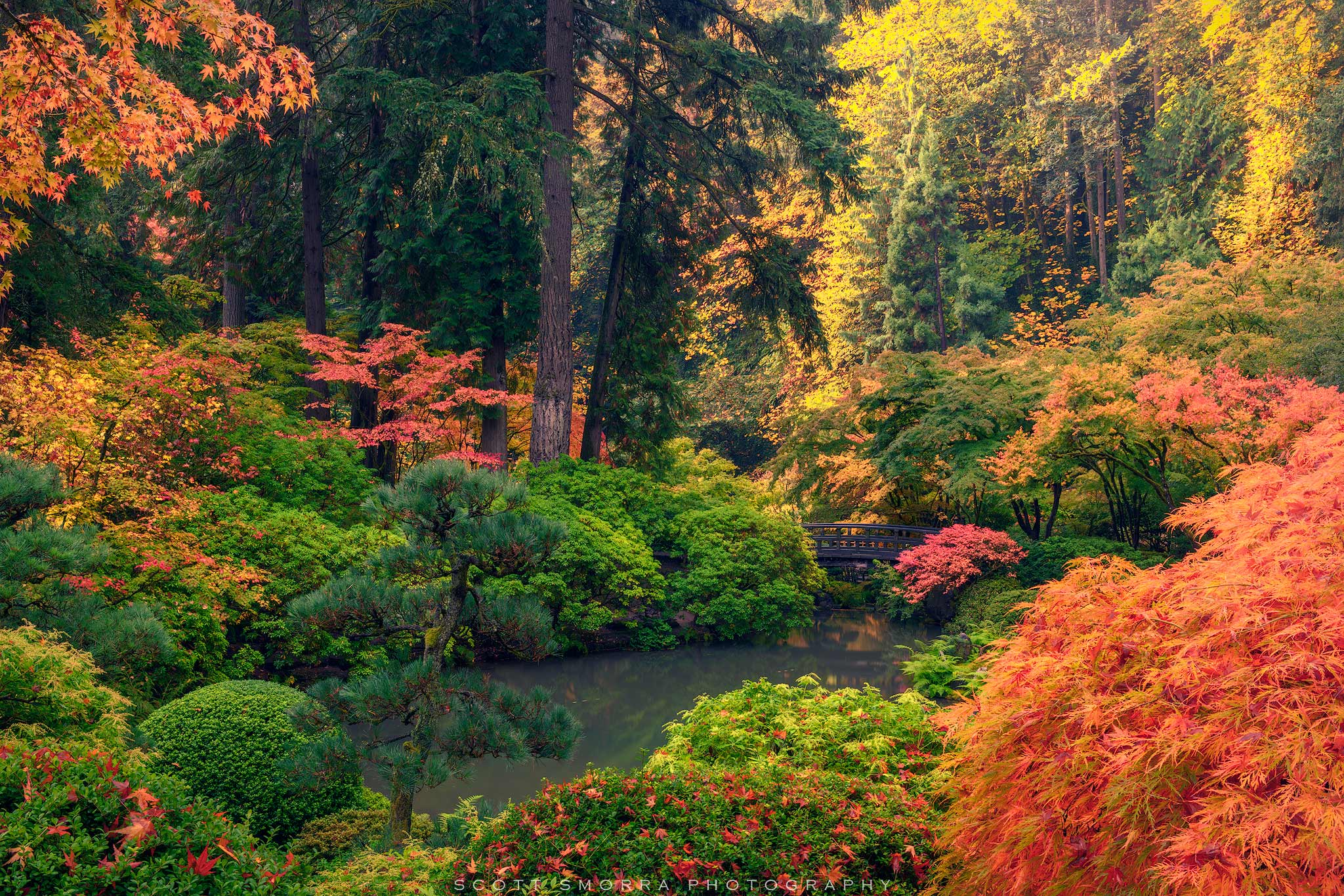 Fine Art Limited Edition of 100 - Vibrant fall colors surround the garden bridge on a peaceful morning at the Portland Japanese...