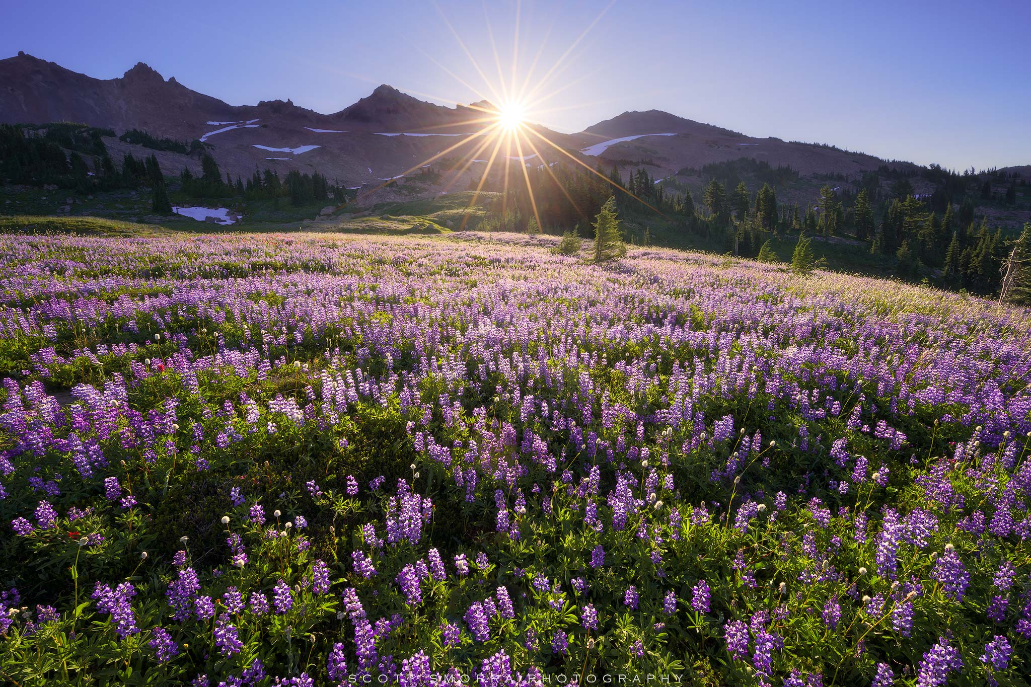 Fine Art Limited Edition of 50 - Day break over a huge field of lupine in the Goat Rocks Wilderness in Washington.  When the...