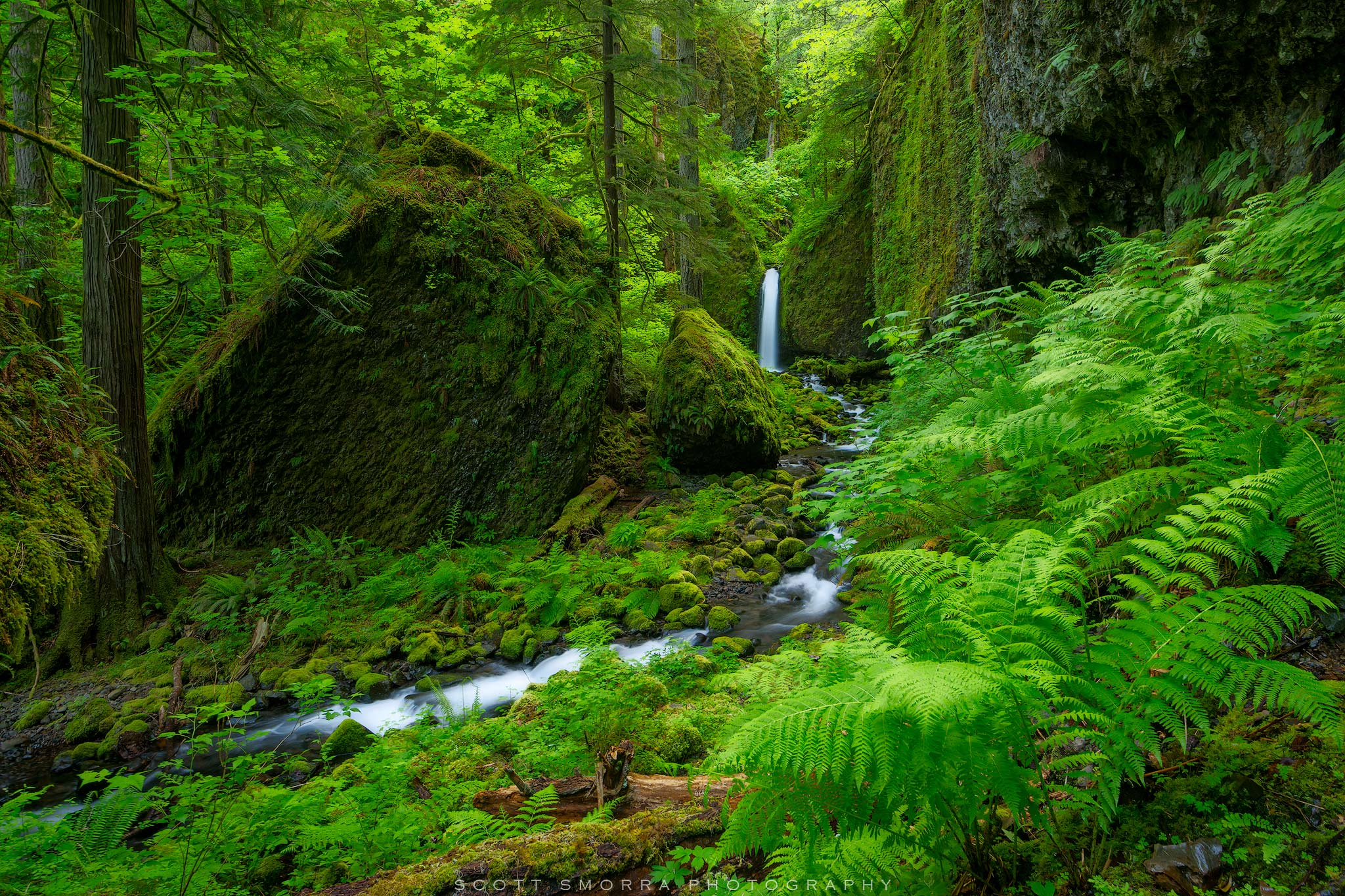 Fine Art Limited Edition of 100 - Peak spring greens surrounding a beautiful waterfall deep in the Columbia River Gorge of Oregon...