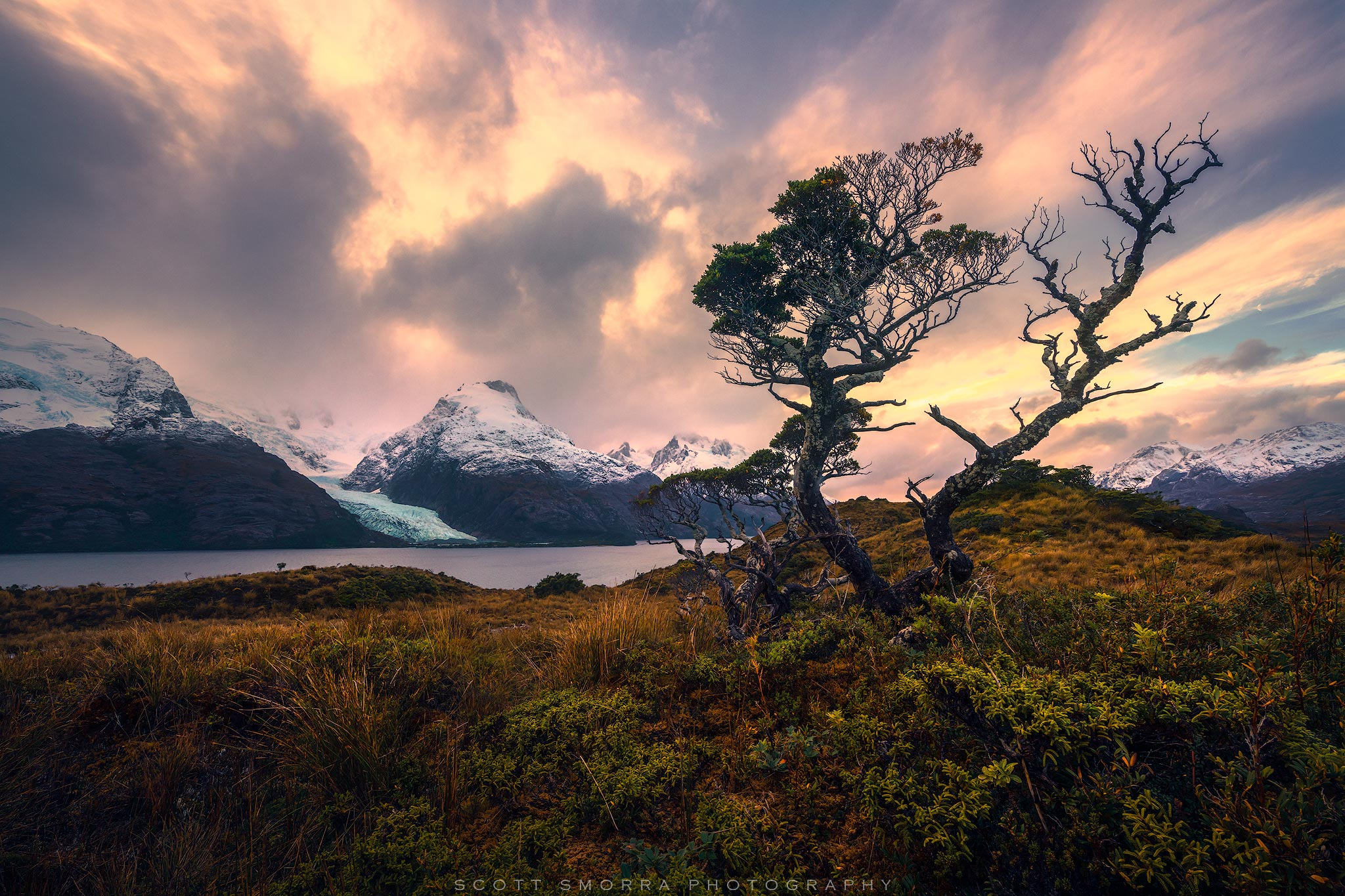 A wind swept Lenga tree surrounded by mountains and glaciers in the fjords of Patagonian Chile. The Lenga trees are everywhere...