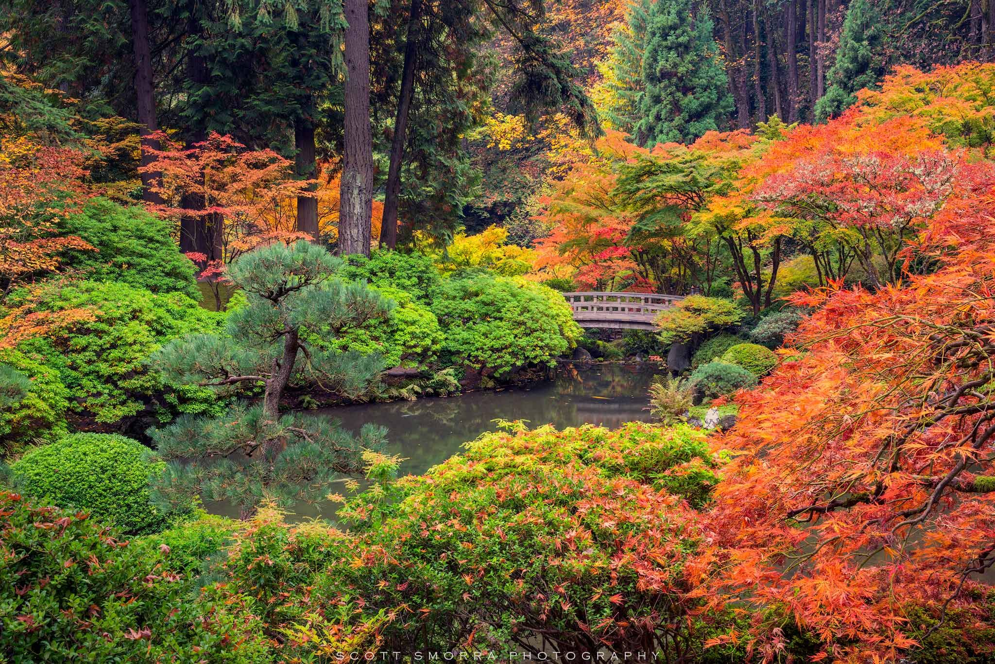 Peak fall colors surround the garden bridge on a quiet and peaceful morning at the Portland Japanese Garden, Portland, Oregon.