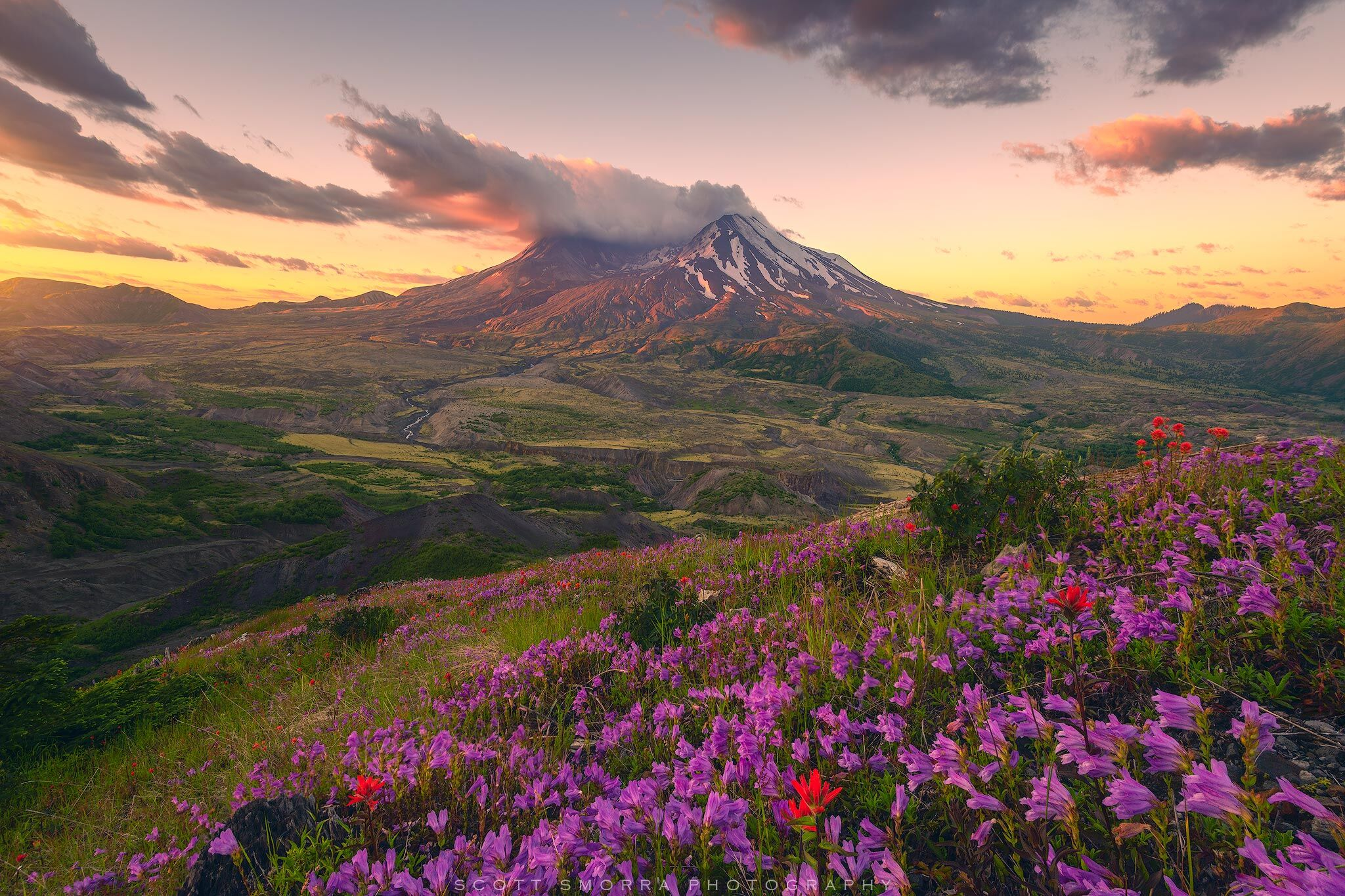 Fine Art Limited Edition of 100 - Sunrise alpenglow and peak summer wildflowers at Mount St. Helens National Volcanic Monument...