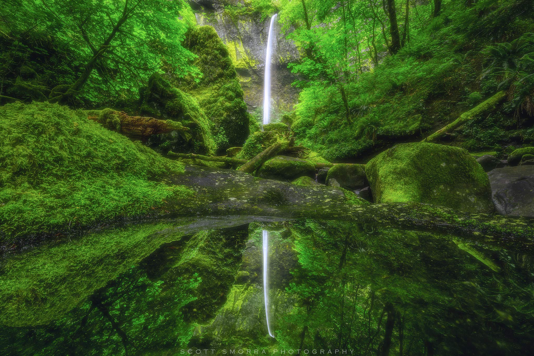 Fine Art Limited Edition of 100 - The reflection of Elowah Falls in a small pool below the falls. The vibrant and lush spring...