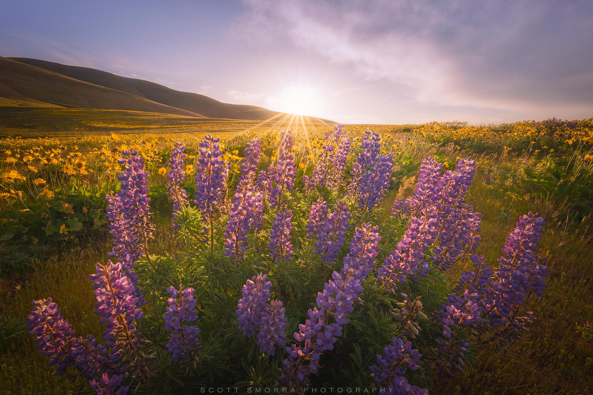 Fine Art Limited Edition of 100 - A sunrise view from the wildflower fields of Columbia Hills State Park, Washington. The wildflowers...