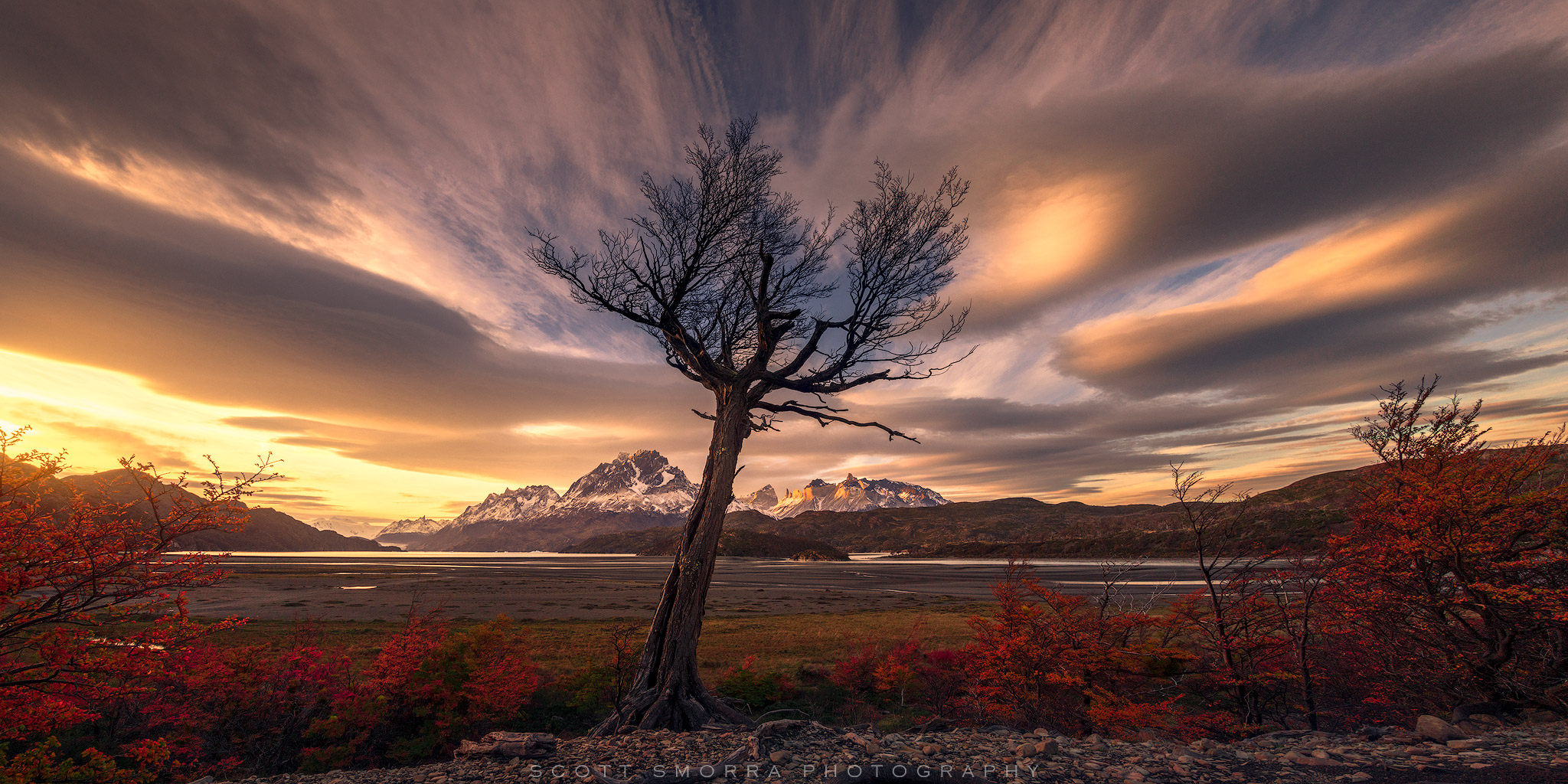 Fine Art Limited Edition of 100 - A leafless and solitary Lenga tree reaches towards a sunset sky filled with lenticular clouds...