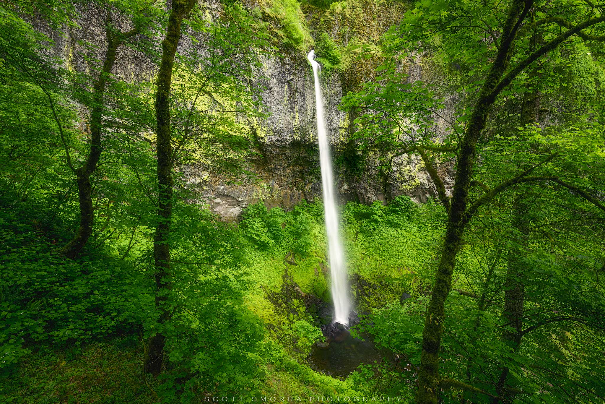 Fine Art Limited Edition of 50 - The majestic Elowah Falls surrounded by a lush springtime temperate rainforest in the Columbia...
