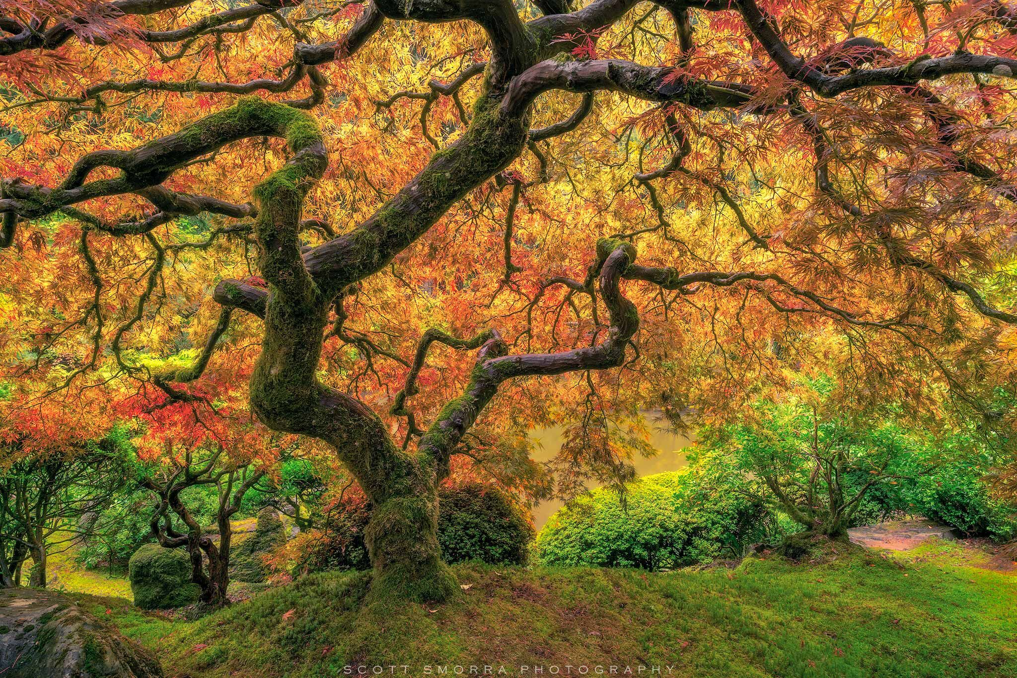 Portland, Japanese, Garden, Fall, Tree, Maple, Famous, Leaves, photo